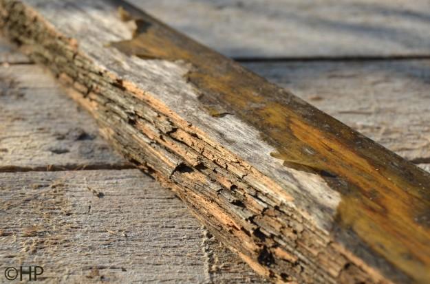 half verrotte plank van rugdeel